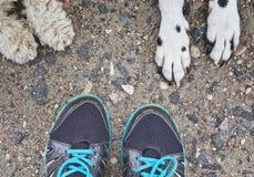 Amitié étroite entre les chiens et leur propriétaire Images stock