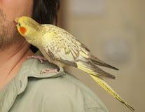 Amitié avec le perroquet. Photographie stock