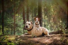 Amitié Crabots dans la forêt Photo stock