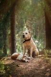 Amitié Crabots dans la forêt Photos stock