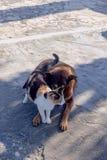 Amitié d'un chat et d'un chien Photos stock