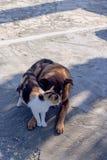 Amitié d'un chat et d'un chien Photos libres de droits