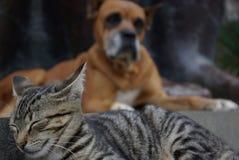 Amitié de chat et de chien pour toujours Photo libre de droits