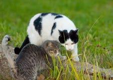 Amitié de chats Image libre de droits