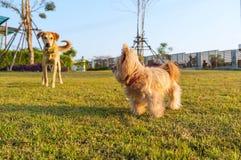 Amitié de chien Images libres de droits
