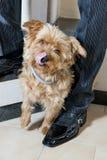 Amitié de chien Image stock