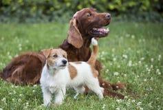 Amitié de chien - amis heureux d'animal familier photo libre de droits