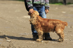 Amitié de chien et de garçon Photographie stock libre de droits