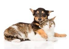 Amitié de chiot et de chat Sur le fond blanc Photographie stock
