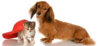 Amitié de crabot et de chat Image libre de droits