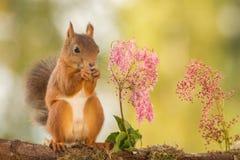 Amitié de fleur Photos libres de droits