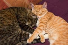 Amitié des deux chats Images stock