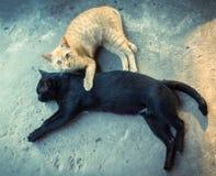 Amitié des deux chats Image libre de droits
