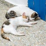 Amitié des deux chats barrés Images libres de droits