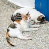 Amitié des deux chats barrés Photos stock