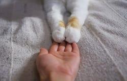 Amitié entre l'humain et le chat Les pattes sont sur la main Photo libre de droits