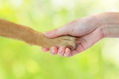 Amitié entre l'humain et le chien Photos stock