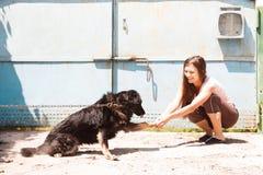 Amitié entre la fille et le chien Photographie stock