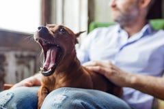 Amitié entre le chien et l'homme Image libre de droits