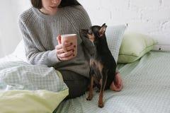 Amitié entre le chien et l'humain Image stock