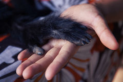 Amitié entre le singe humain, poignée de main Protection des animaux mis en danger Photos libres de droits