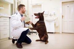 Amitié entre le vétérinaire et le chien Photos stock