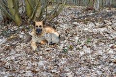 Amitié entre un chien et un chat Image libre de droits