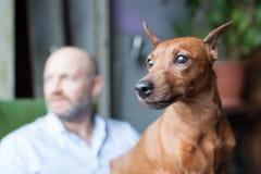 Amitié entre un chien et un homme Images libres de droits