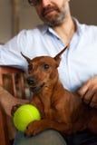 Amitié entre un chien et un homme Photo stock
