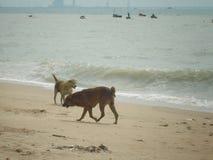 Amitié sur la plage Images stock