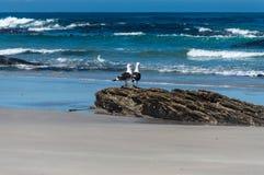 Amizade do beira-mar Imagem de Stock