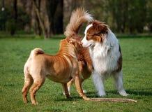 Amizade do cão Fotos de Stock Royalty Free
