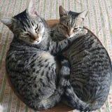 Amizade e dois gatos fotos de stock