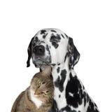 Amizade próxima entre um gato e um cão Fotografia de Stock
