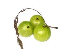 Amla eller indiska krusbär Arkivbild