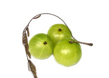 Amla or Indian gooseberries stock photography