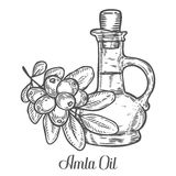 Amla Indian gooseberry oil, Phyllanthus emblica. Hand drawn engraved vector sketch etch illustration. Ingredient for hair and body care cream, lotion Royalty Free Stock Photography