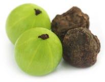Amla owoc wysuszone i zielone - Obrazy Stock