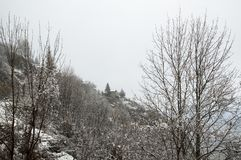 Amleto nella neve Fotografie Stock Libere da Diritti