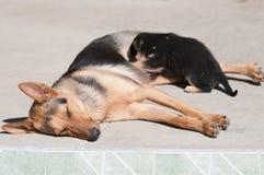 Amma för hund arkivfoton