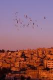 Amman au coucher du soleil Photographie stock