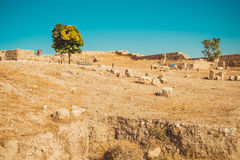 Amman Citadel area, Jordan. Archaeological site. Tourism industry. Summer vacation. Travel concept. Tourist attraction. Sightseein Royalty Free Stock Photos