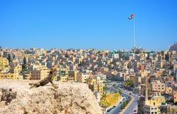 Amman city the capital of Jordan. A lizard on a rock and Amman city the capital of Jordan in background royalty free stock photo