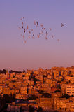 Amman no por do sol Fotografia de Stock