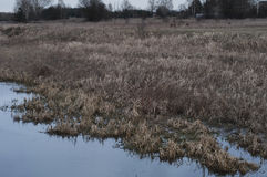 ammerbach德国获得草耶拿牧场地绵羊雪图林根州在谷walley冬天之下 库存图片