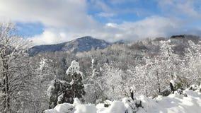 ammerbach Germany dostaje trawy Jena paśnika cakli śniegu thuringia pod dolinną walley zima Fotografia Royalty Free
