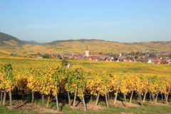 Ammerschwihr in the vineyard of Alsace Stock Images