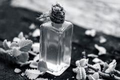 Ammi de Trachyspermum, huile d'Ajwain avec des feuilles sur un fond de jute Photo stock