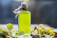 Ammi de Trachyspermum, huile d'Ajwain avec des feuilles sur un fond de jute Photo libre de droits