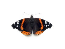 Ammiraglio rosso farfalla Immagini Stock